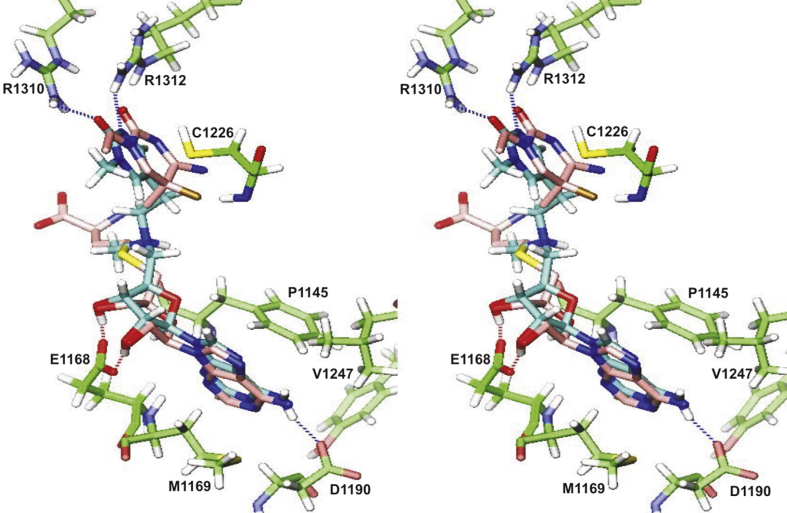 In Silico Optimization of the First DNA-Independent Mechanism-Based Inhibitor of Mammalian DNA Methyltransferase DNMT